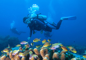 Manado and Bunaken Diving Cruise