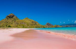 Komodo Island Trip 2D/1N