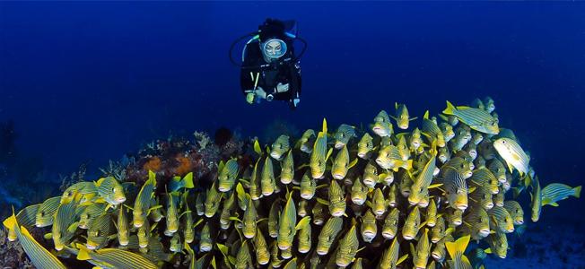 Raja Ampat Diving Safari