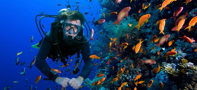 Raja Ampat Diving Cruise