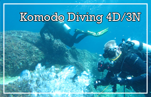 Komodo Diving Tour 4D/3N